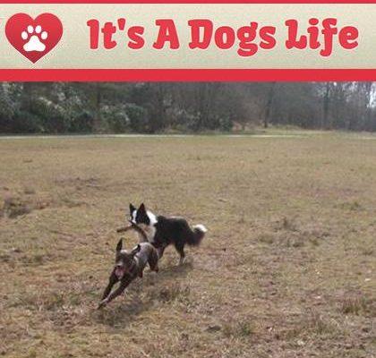 It's a Dog's Life Chorley